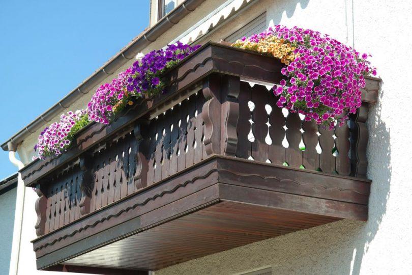Kwiaty Na Południowy Balkon Projektoskoppl