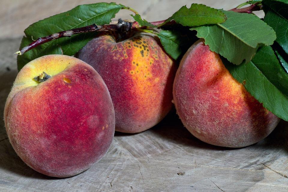 Jak uniknąć choroby brzoskwini?
