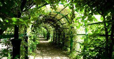 Pergola w ogrodzie i nie tylko