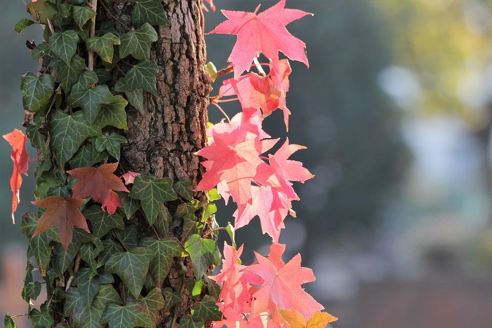 Rośliny pnące na drzewie
