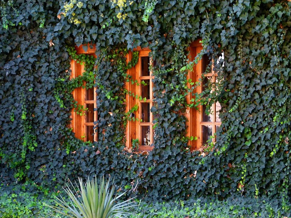 Rośliny pnące szybkorosnące - stwórz zielone ściany