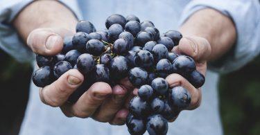 Uprawa winogron - porady