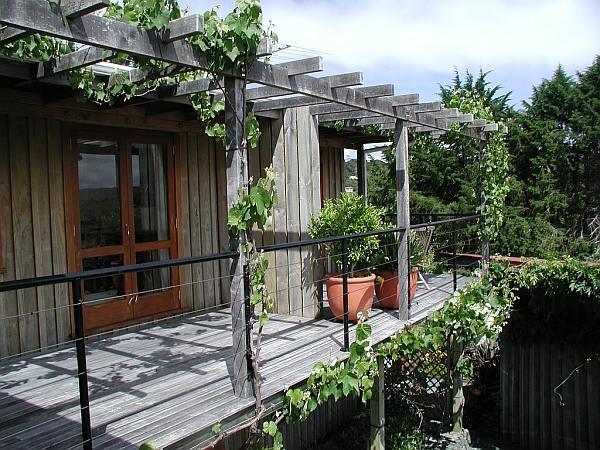 Winogrona na balkonie
