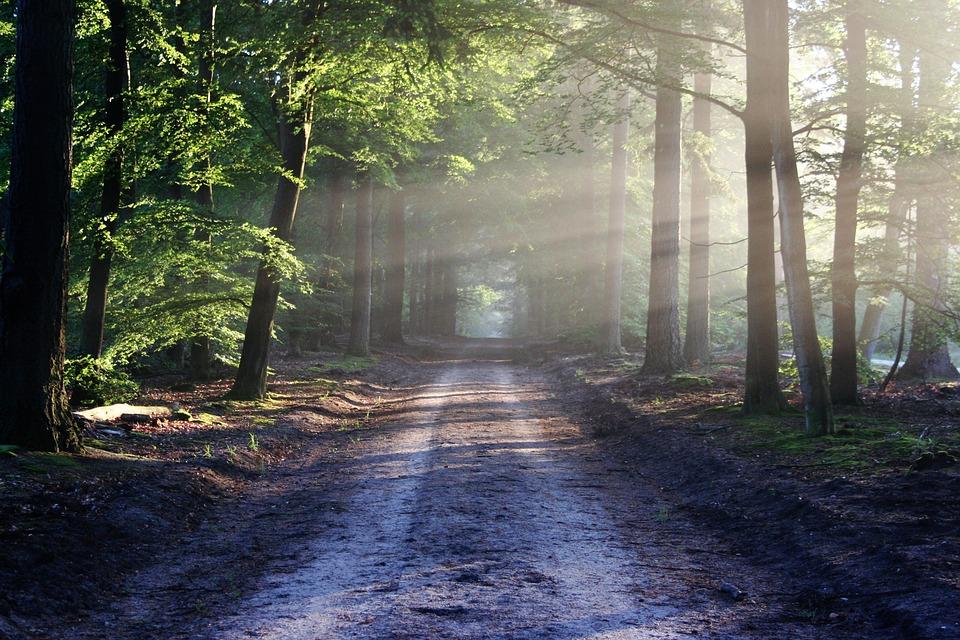 Wycinka drzew w lesie